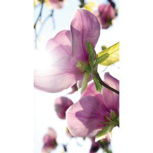 AG ART Záves Flowers Purple, 140 x 245 cm